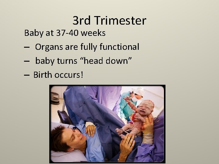 3 rd Trimester Baby at 37 -40 weeks – Organs are fully functional –
