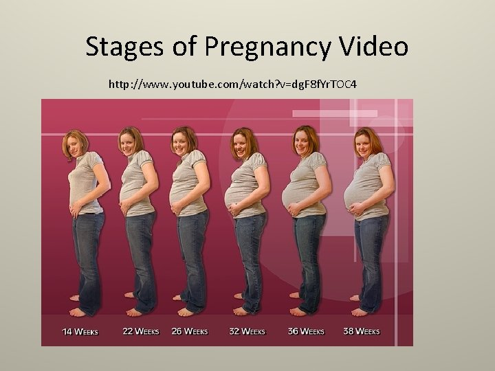 Stages of Pregnancy Video http: //www. youtube. com/watch? v=dg. F 8 f. Yr. TOC
