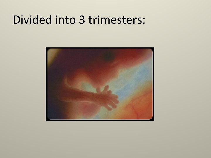 Divided into 3 trimesters: