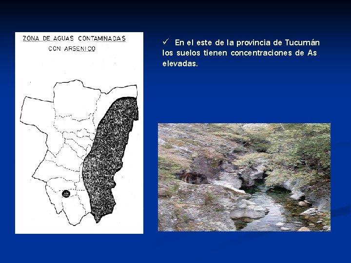 ü En el este de la provincia de Tucumán los suelos tienen concentraciones de