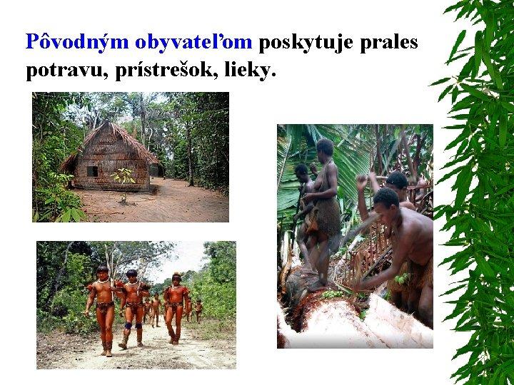 Pôvodným obyvateľom poskytuje prales potravu, prístrešok, lieky.