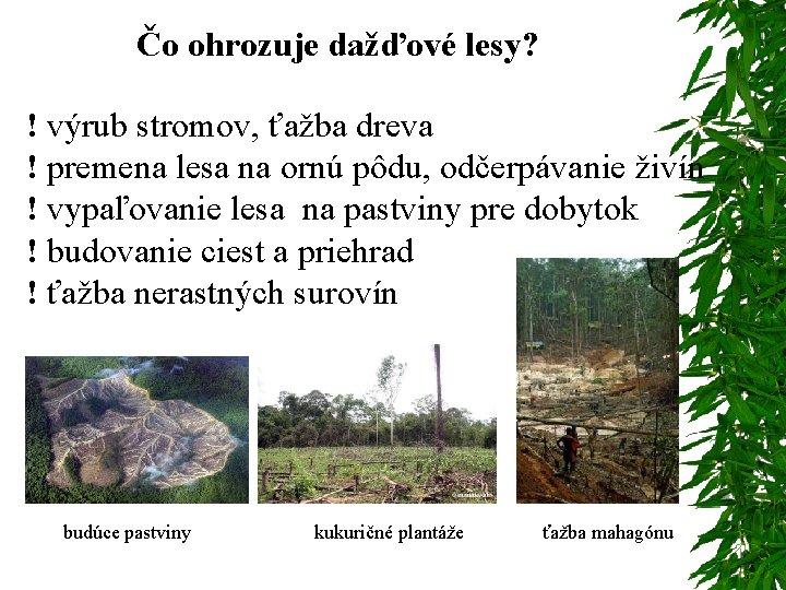 Čo ohrozuje dažďové lesy? ! výrub stromov, ťažba dreva ! premena lesa na ornú