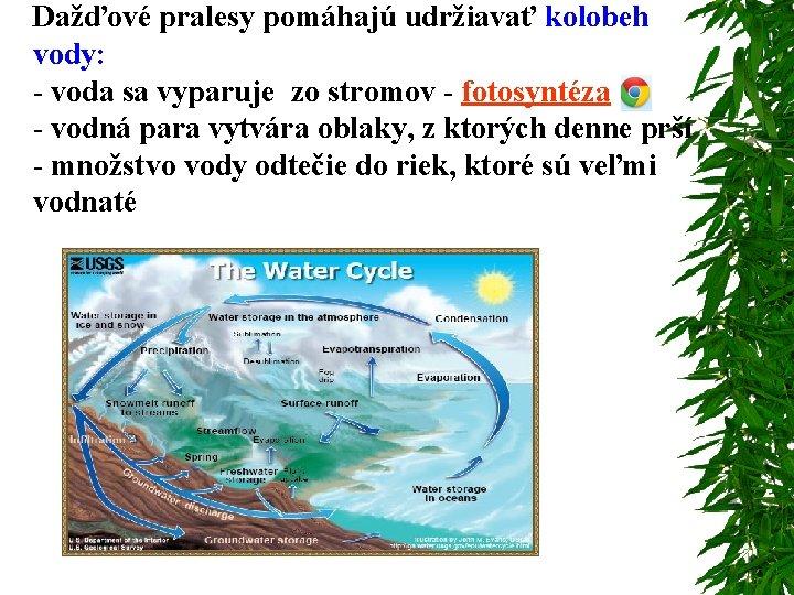 Dažďové pralesy pomáhajú udržiavať kolobeh vody: - voda sa vyparuje zo stromov - fotosyntéza