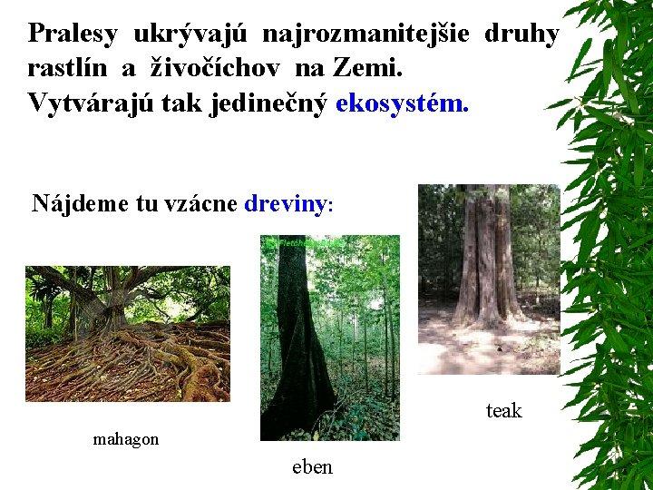 Pralesy ukrývajú najrozmanitejšie druhy rastlín a živočíchov na Zemi. Vytvárajú tak jedinečný ekosystém. Nájdeme
