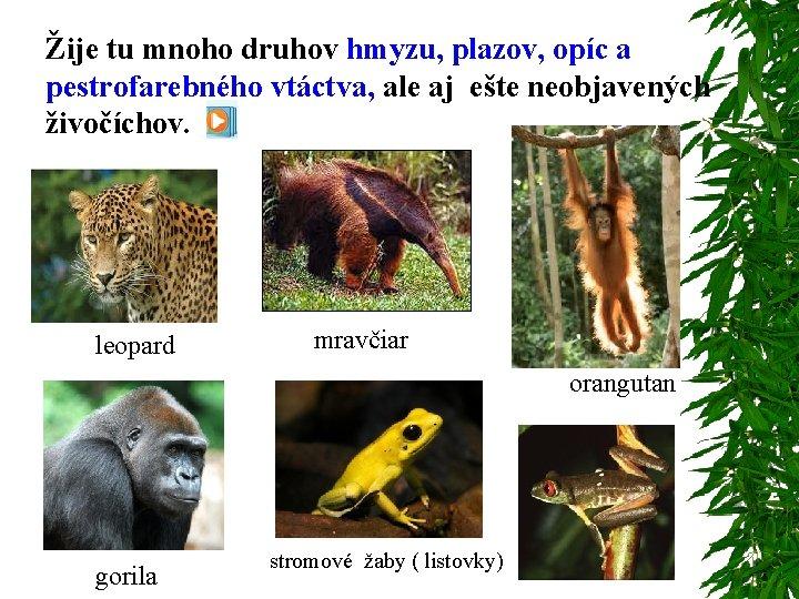 Žije tu mnoho druhov hmyzu, plazov, opíc a pestrofarebného vtáctva, ale aj ešte neobjavených
