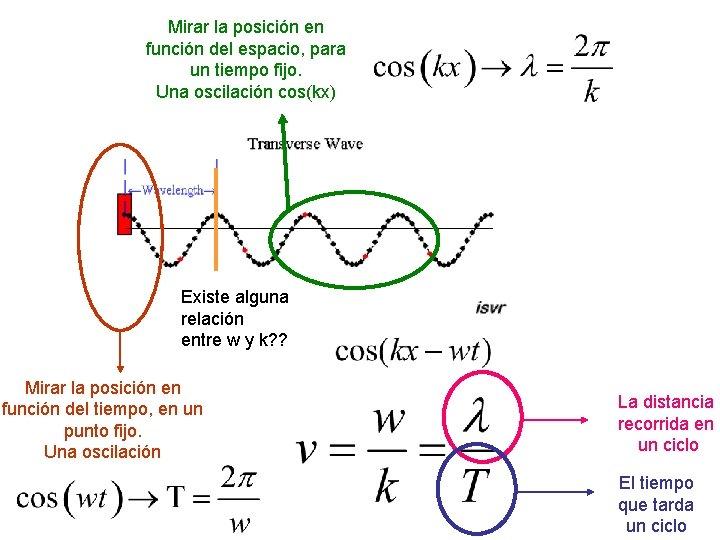 Mirar la posición en función del espacio, para un tiempo fijo. Una oscilación cos(kx)
