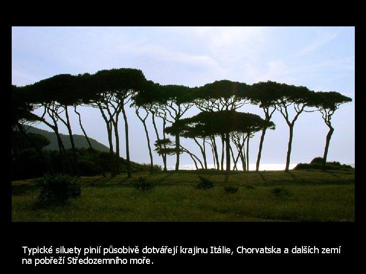 Typické siluety pinií působivě dotvářejí krajinu Itálie, Chorvatska a dalších zemí na pobřeží Středozemního