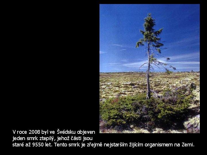 V roce 2008 byl ve Švédsku objeven jeden smrk ztepilý, jehož části jsou staré