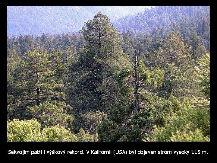 Sekvojím patří i výškový rekord. V Kalifornii (USA) byl objeven strom vysoký 115 m.