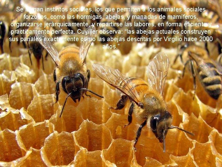 Se llaman instintos sociales, los que permiten a los animales sociales forzosos, como las