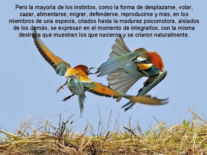 Pero la mayoría de los instintos, como la forma de desplazarse, volar, cazar, alimentarse,