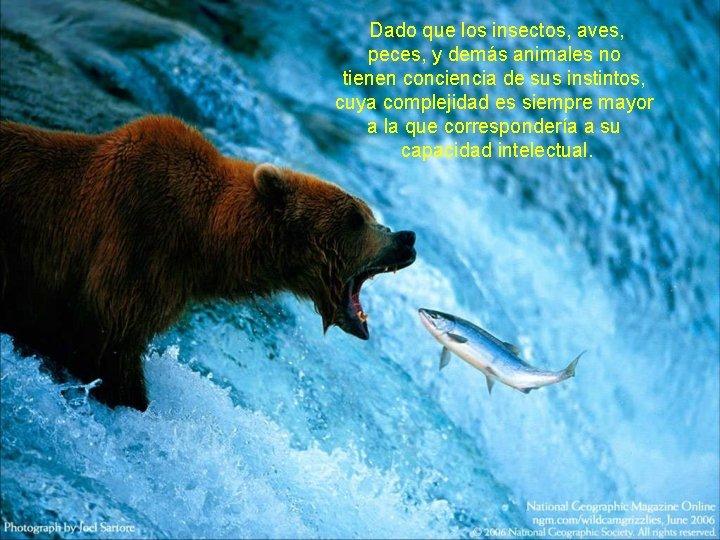 Dado que los insectos, aves, peces, y demás animales no tienen conciencia de
