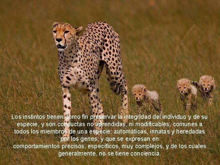 Los instintos tienen como fin preservar la integridad del individuo y de su especie,