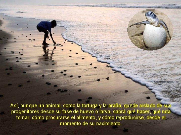 Así, aunque un animal, como la tortuga y la araña, quede aislado de sus