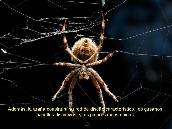 Además, la araña construirá su red de diseño característico; los gusanos, capullos distintivos; y