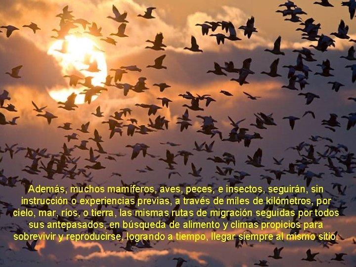 Además, muchos mamíferos, aves, peces, e insectos, seguirán, sin instrucción o experiencias previas, a