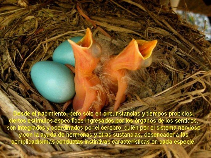 Desde el nacimiento, pero sólo en circunstancias y tiempos propicios, ciertos estímulos específicos ingresados