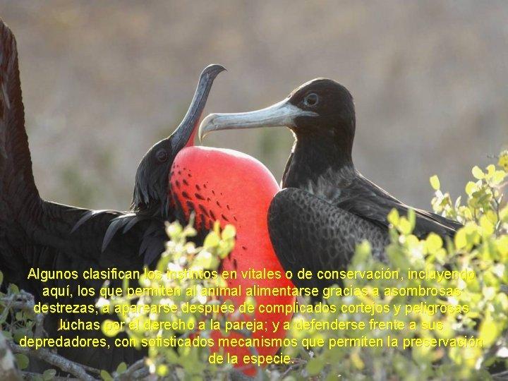 Algunos clasifican los instintos en vitales o de conservación, incluyendo aquí, los que permiten