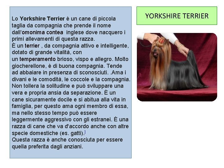 Lo Yorkshire Terrier è un cane di piccola taglia da compagnia che prende il