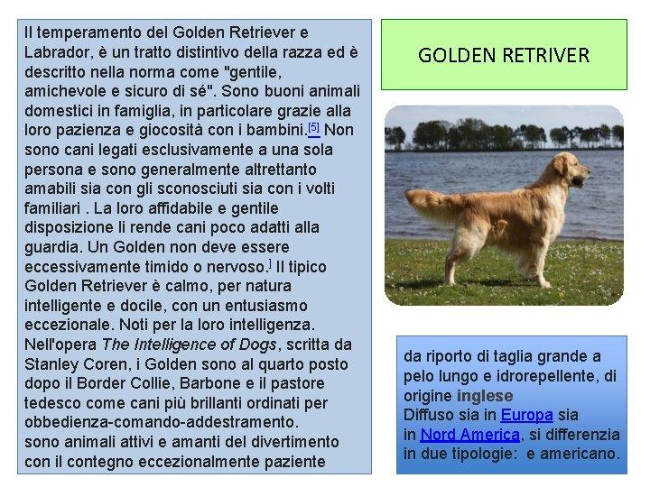 Il temperamento del Golden Retriever e Labrador, è un tratto distintivo della razza ed