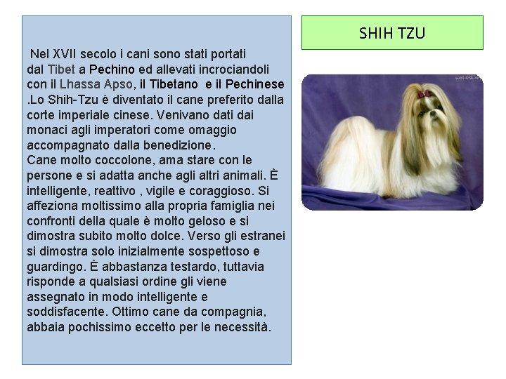 SHIH TZU Nel XVII secolo i cani sono stati portati dal Tibet a Pechino