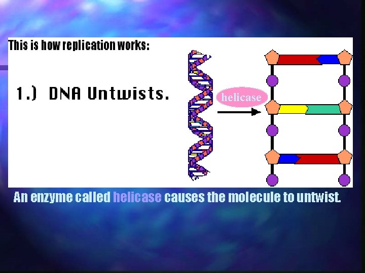 helicase An enzyme called helicase causes the molecule to untwist.