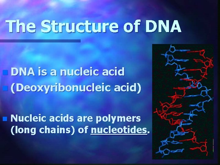 The Structure of DNA n DNA is a nucleic acid n (Deoxyribonucleic acid) n