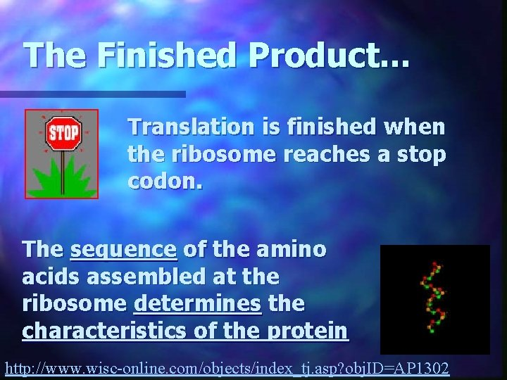 The Finished Product. . . Translation is finished when the ribosome reaches a stop