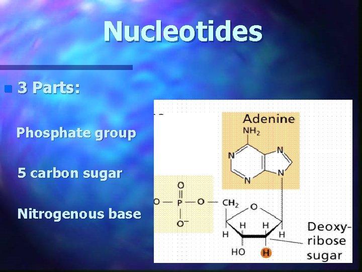 Nucleotides n 3 Parts: Phosphate group 5 carbon sugar Nitrogenous base
