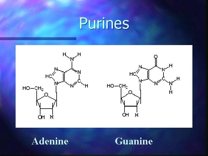 Purines Adenine Guanine