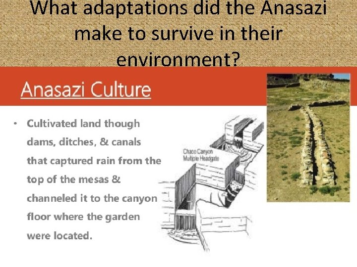 What adaptations did the Anasazi make to survive in their environment?