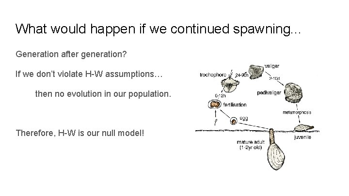 What would happen if we continued spawning. . . Generation after generation? If we