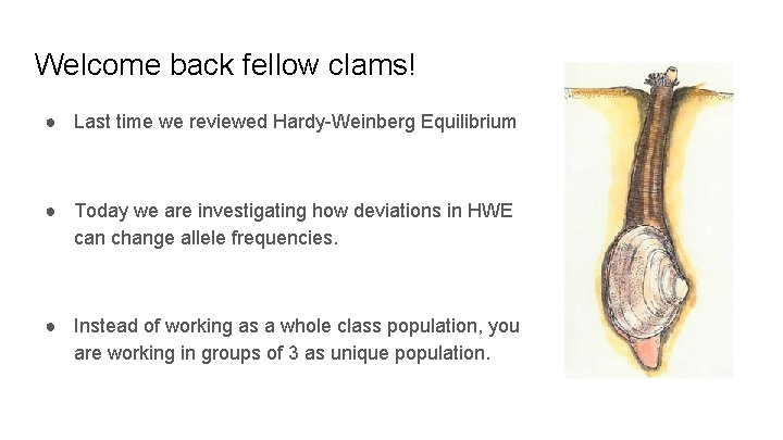 Welcome back fellow clams! ● Last time we reviewed Hardy-Weinberg Equilibrium ● Today we