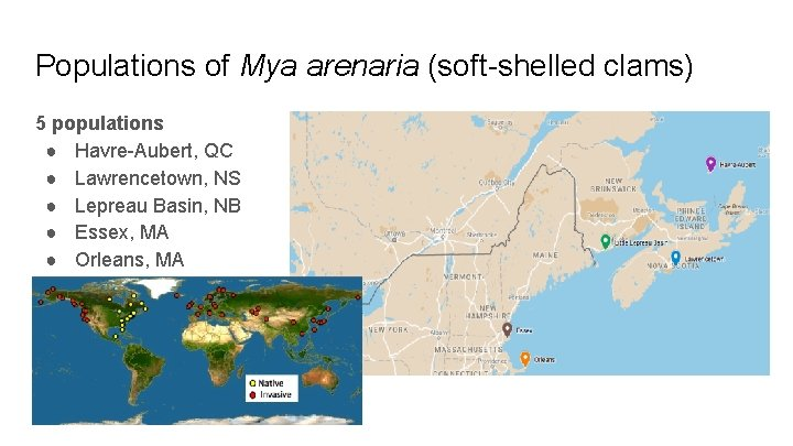 Populations of Mya arenaria (soft-shelled clams) 5 populations ● Havre-Aubert, QC ● Lawrencetown, NS