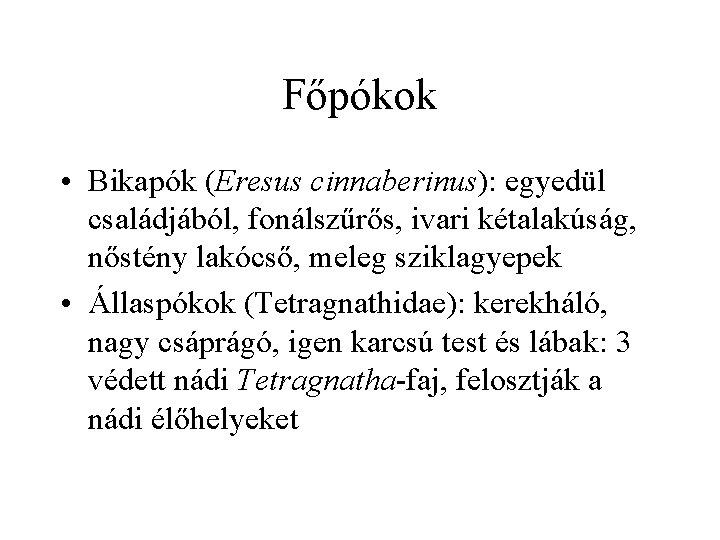 Főpókok • Bikapók (Eresus cinnaberinus): egyedül családjából, fonálszűrős, ivari kétalakúság, nőstény lakócső, meleg sziklagyepek