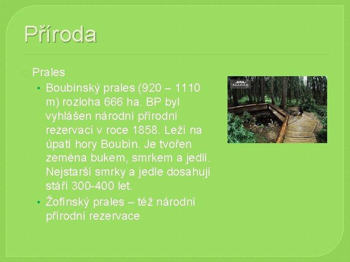 Příroda � Prales • Boubínský prales (920 – 1110 m) rozloha 666 ha. BP