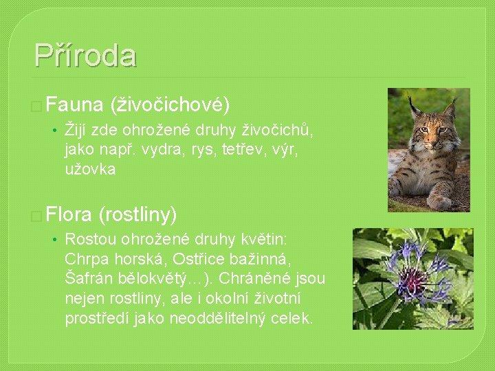 Příroda � Fauna (živočichové) • Žijí zde ohrožené druhy živočichů, jako např. vydra, rys,