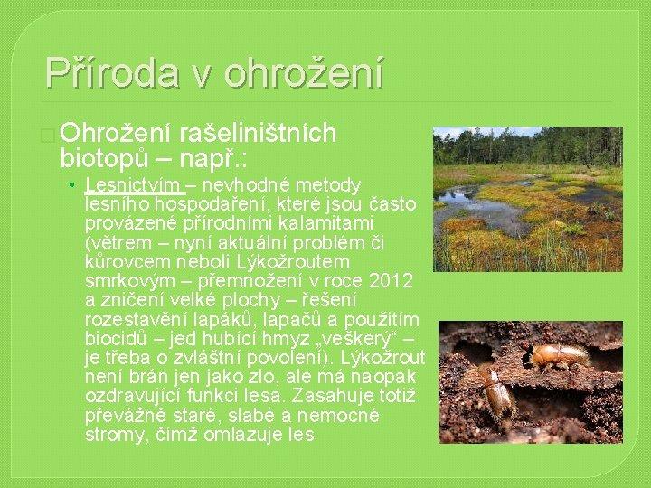 Příroda v ohrožení � Ohrožení rašeliništních biotopů – např. : • Lesnictvím – nevhodné