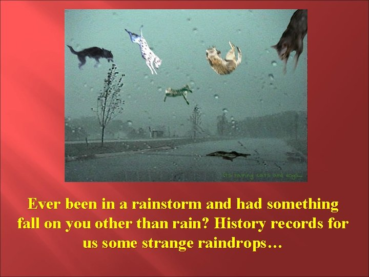 Ever been in a rainstorm and had something fall on you other than rain?
