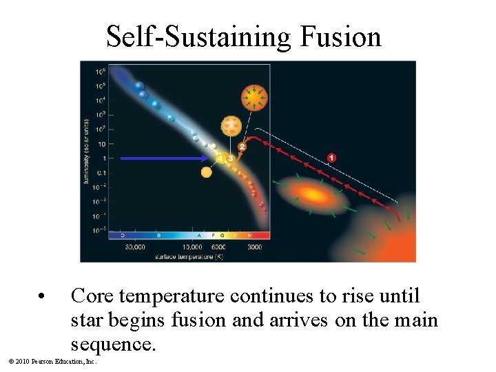 Self-Sustaining Fusion • Core temperature continues to rise until star begins fusion and arrives