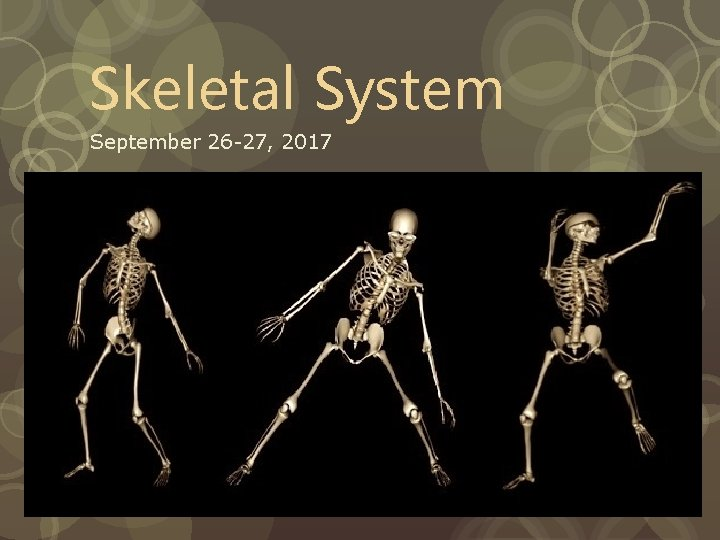 Skeletal System September 26 -27, 2017