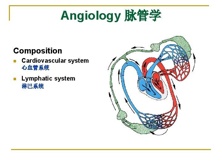 Angiology 脉管学 Composition n Cardiovascular system 心血管系统 n Lymphatic system 淋巴系统