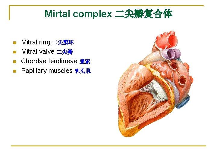 Mirtal complex 二尖瓣复合体 n n Mitral ring 二尖瓣环 Mitral valve 二尖瓣 Chordae tendineae 腱索