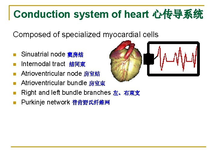 Conduction system of heart 心传导系统 Composed of specialized myocardial cells n n n Sinuatrial