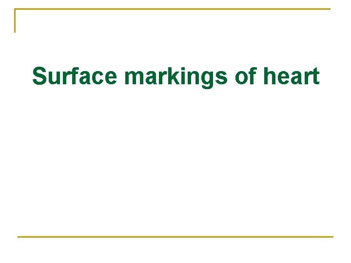Surface markings of heart