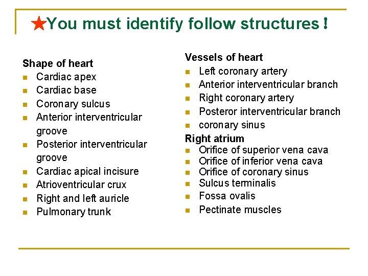 ★You must identify follow structures! Shape of heart n Cardiac apex n Cardiac base