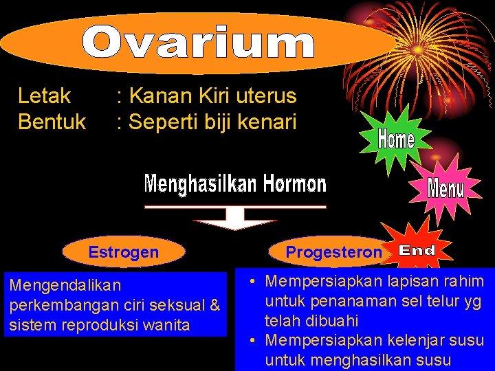 Letak Bentuk : Kanan Kiri uterus : Seperti biji kenari Estrogen Mengendalikan perkembangan ciri
