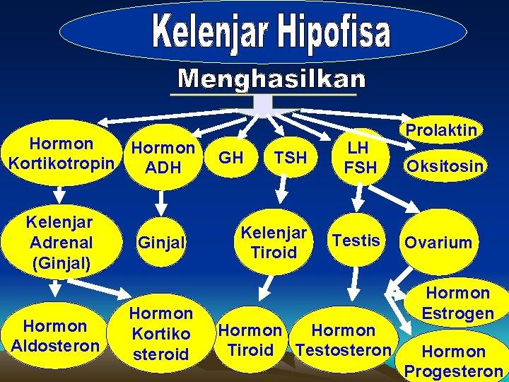 Hormon Kortikotropin ADH Kelenjar Adrenal (Ginjal) Hormon Aldosteron Ginjal Hormon Kortiko steroid TSH LH