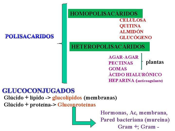 HOMOPOLISACÁRIDOS CELULOSA QUITINA ALMIDÓN GLUCÓGENO POLISACARIDOS HETEROPOLISACÁRIDOS AGAR-AGAR plantas PECTINAS GOMAS ÁCIDO HIALURÓNICO HEPARINA