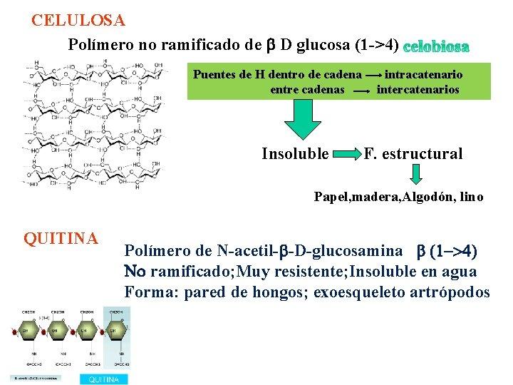 CELULOSA Polímero no ramificado de b D glucosa (1 ->4) Puentes de H dentro